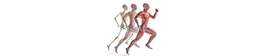 Sistema Osteo-Articular