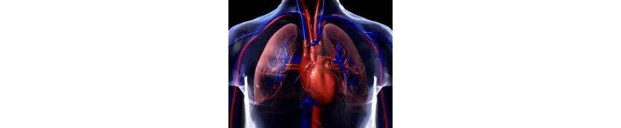 Sistema Cardio-Vascular